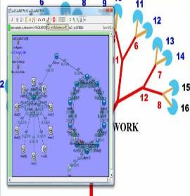 VASCULAR-NETWORK